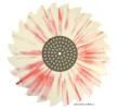Speciální tvar vinylové desky - ozubená pila, motiv batiky, červená a bílá barva.